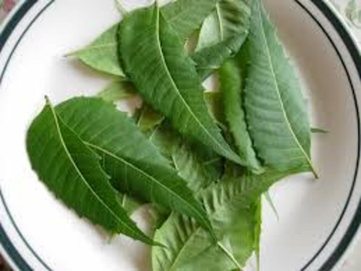 Apply Neem Leaves Paste for Best Acne Removal
