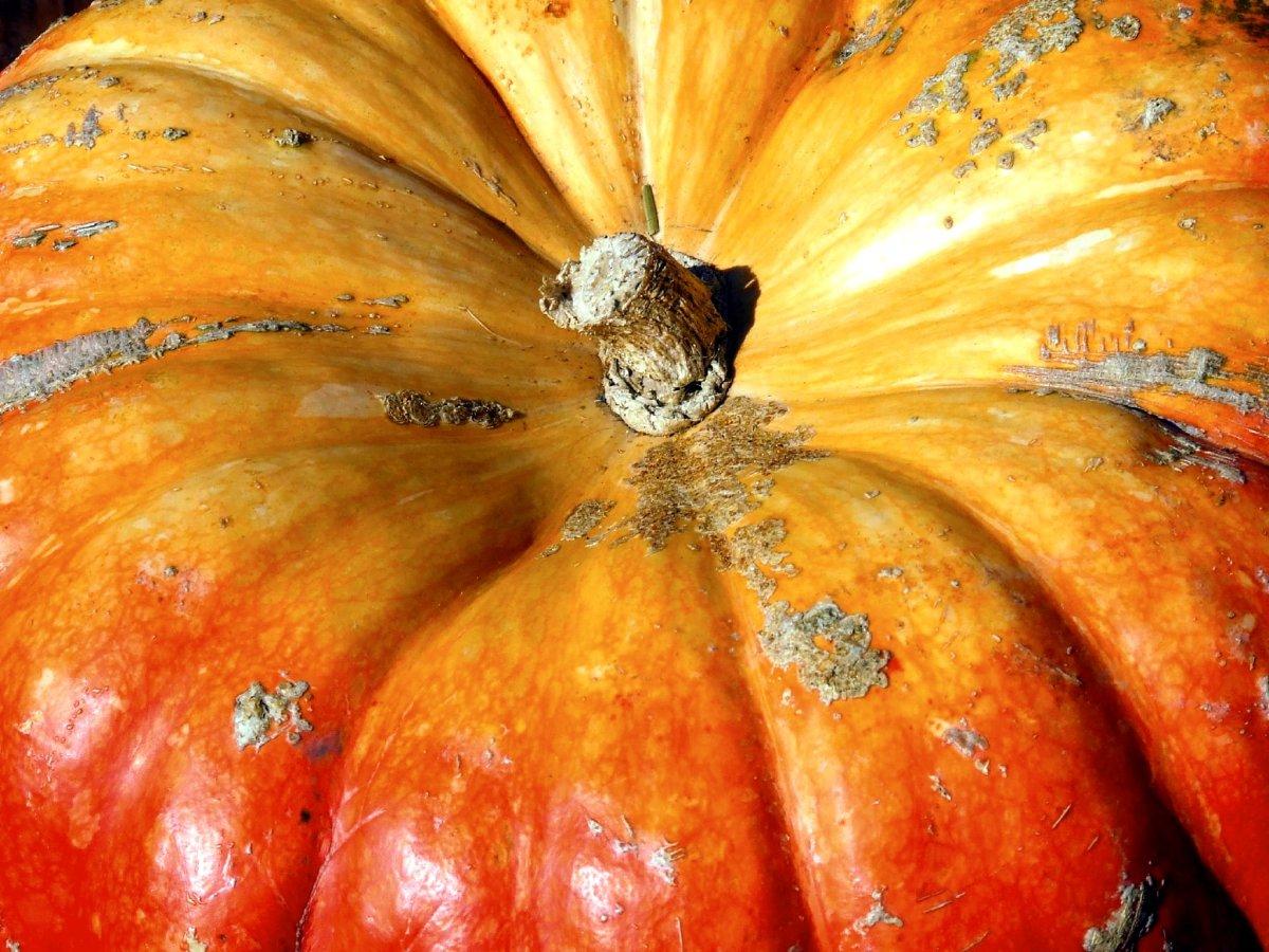 Papaya & Pumpkin exfoliating mask is an easy skin care recipe to make at home.