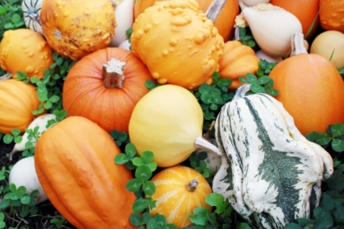looks may be deceiving as pumpkins are full of skin beneficial vitamins, enzymes and antioxidants.