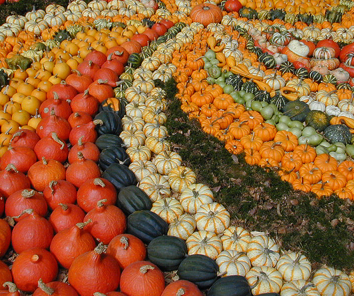 pumpkins come in a rainbow of different colors.