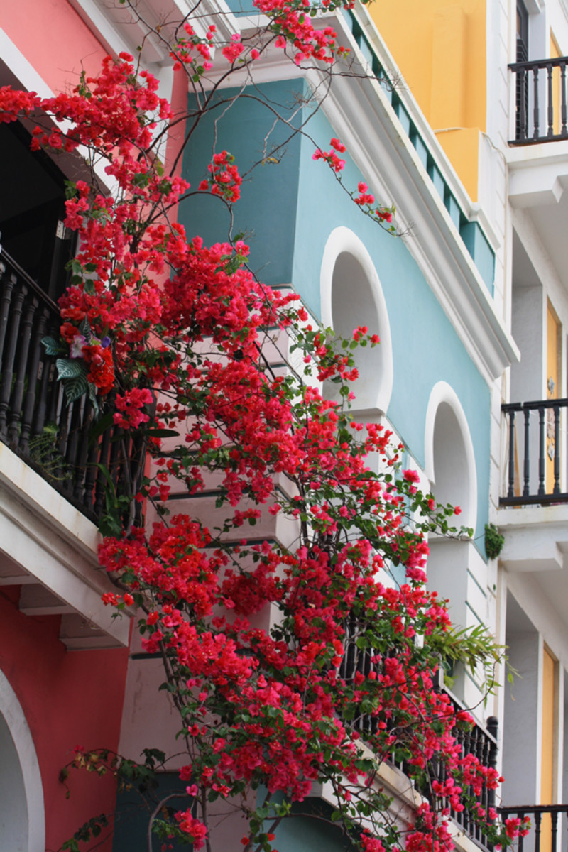 Colombians use flowers to decorate their homes