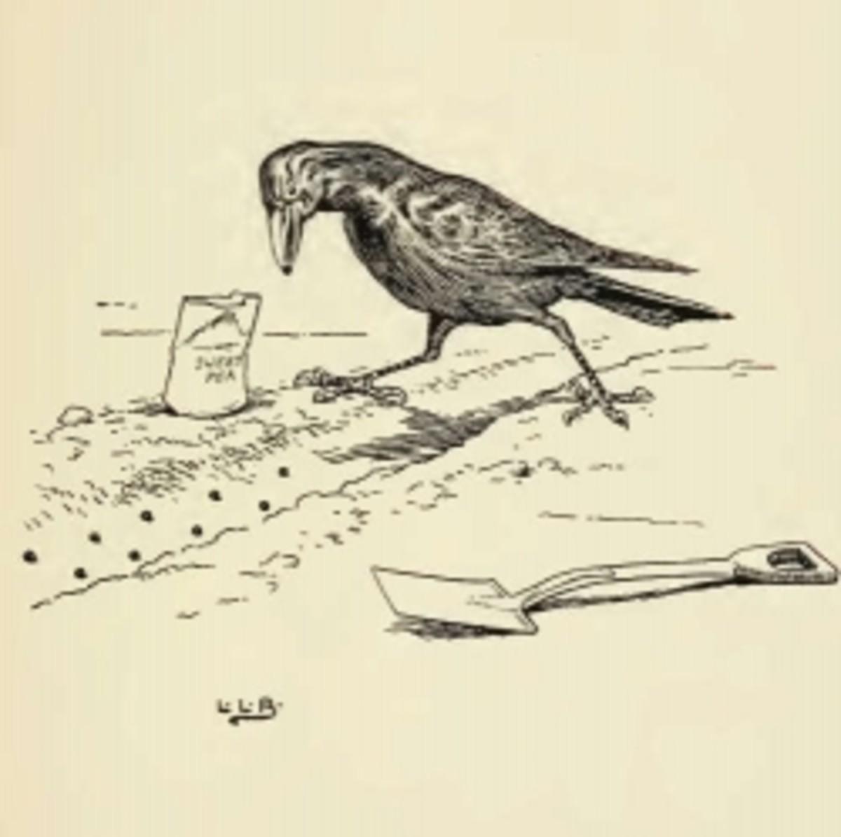 Johnny Crow by L Leslie Brooke