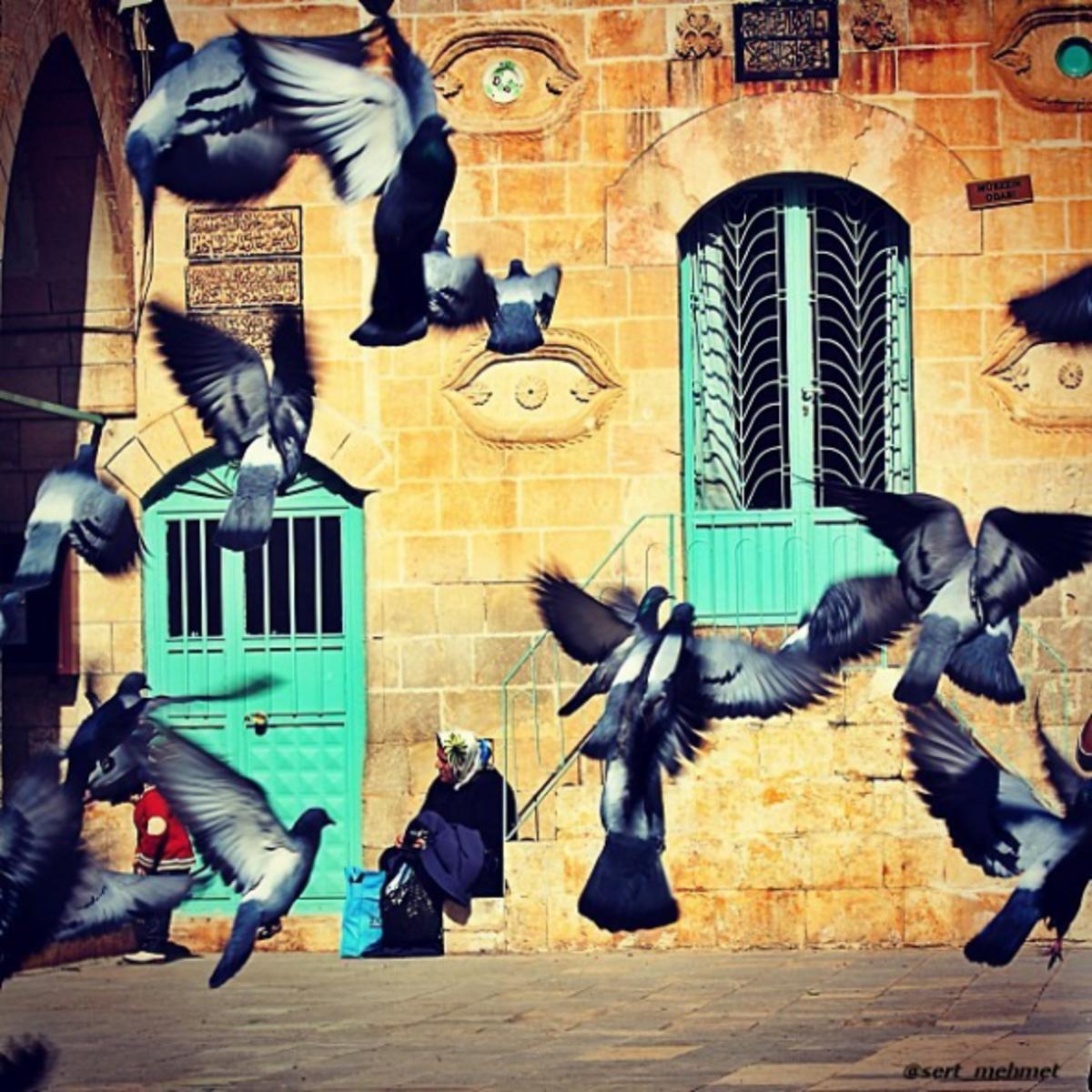 Mehmet Sert photography