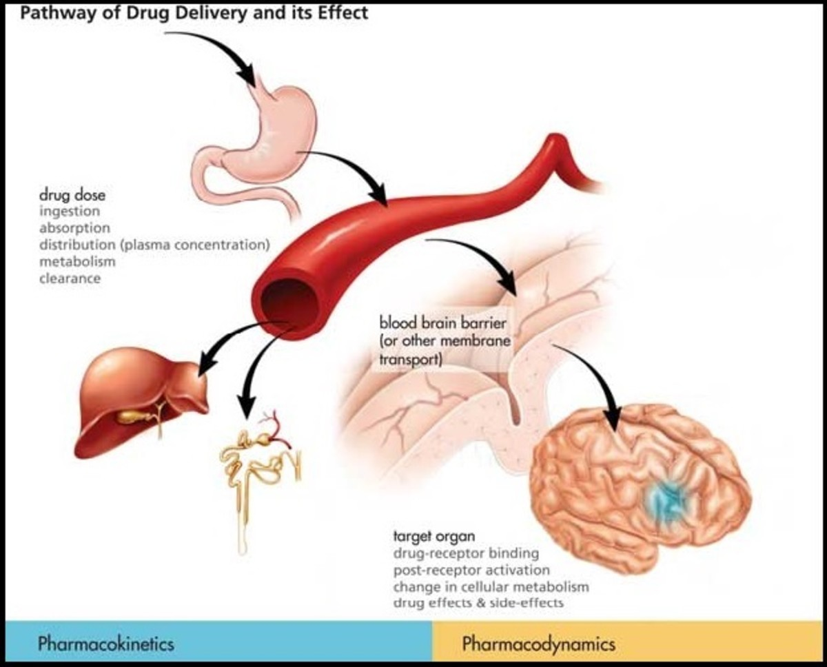 Pharmacokinetic and Pharmacodynamic