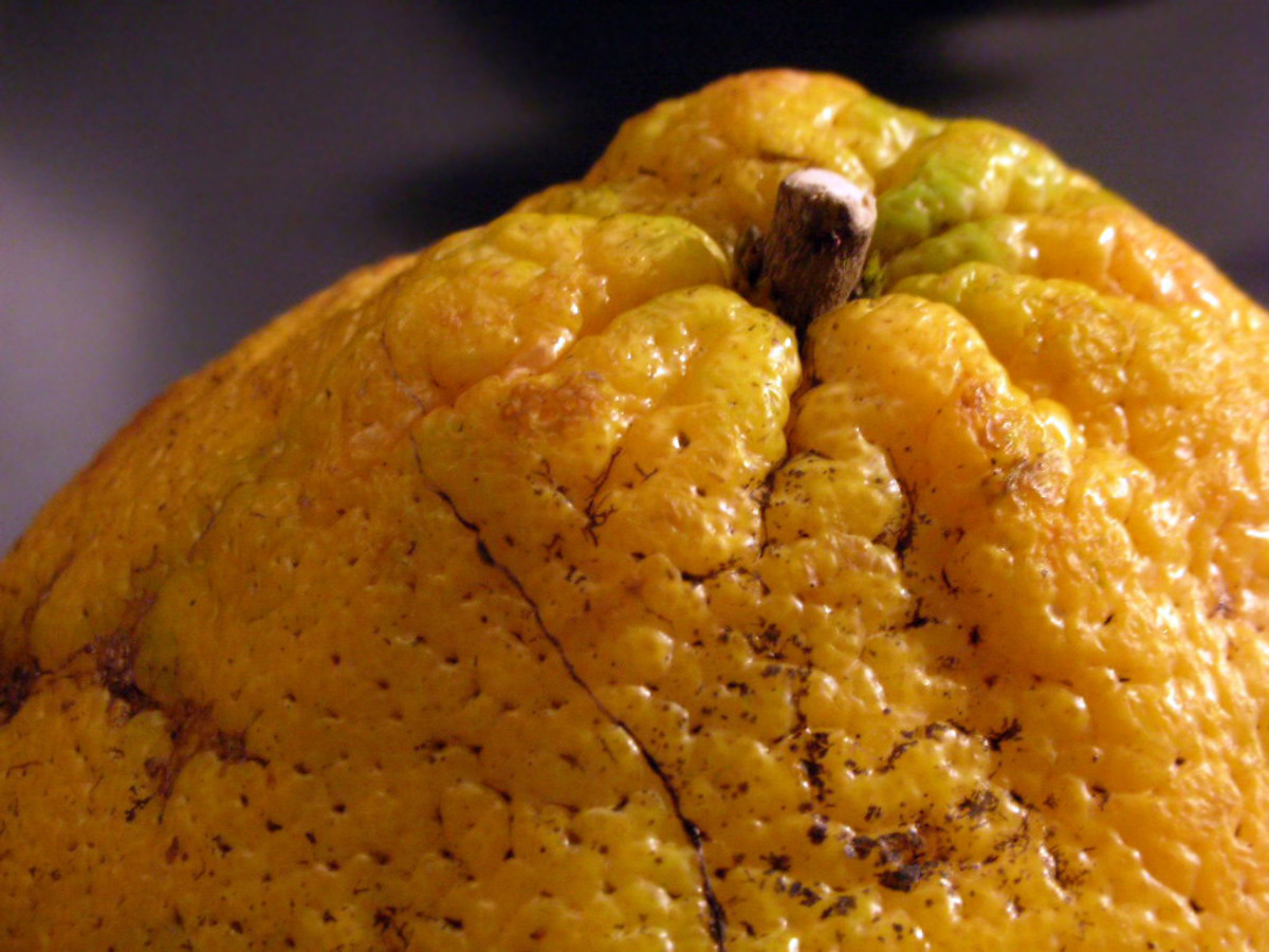 Ugli Fruit is the trademark name for The Jamaican Tangelo Fruit.
