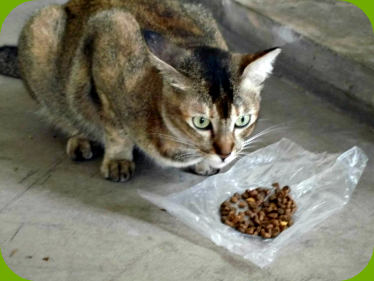 the-benefits-and-disadvantages-of-pet-sterilization