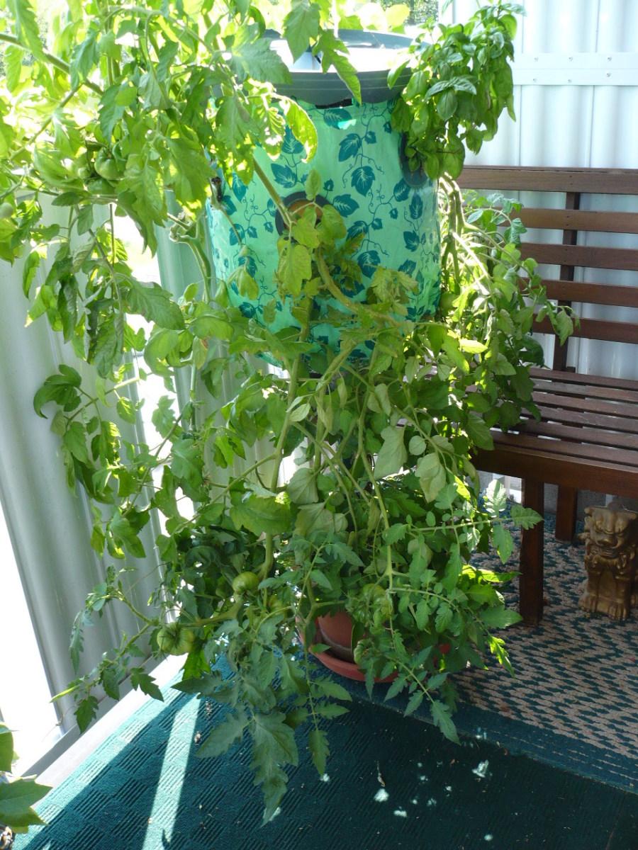 My Topsy Turvy Vegetable Garden