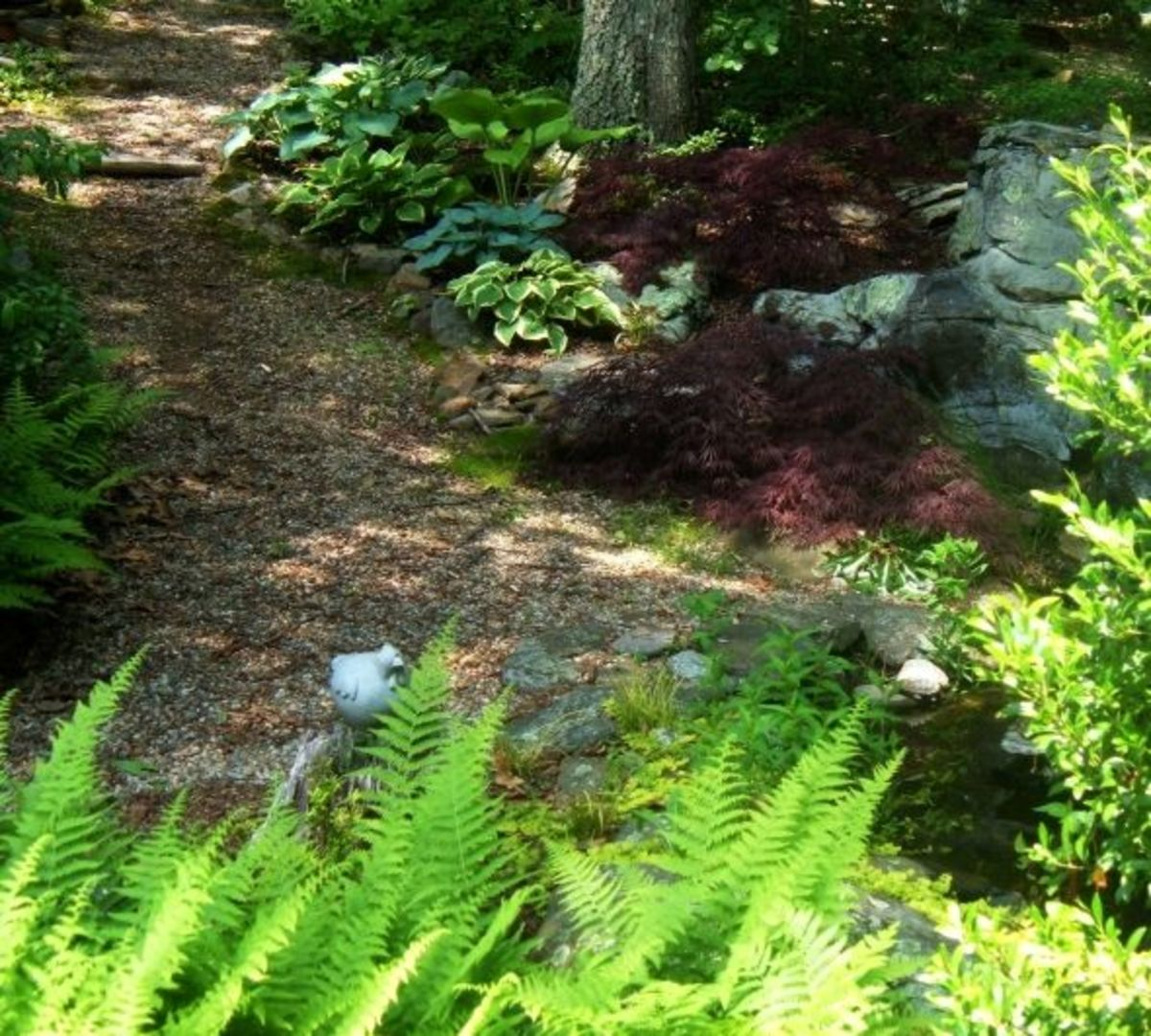 Native New England Plants