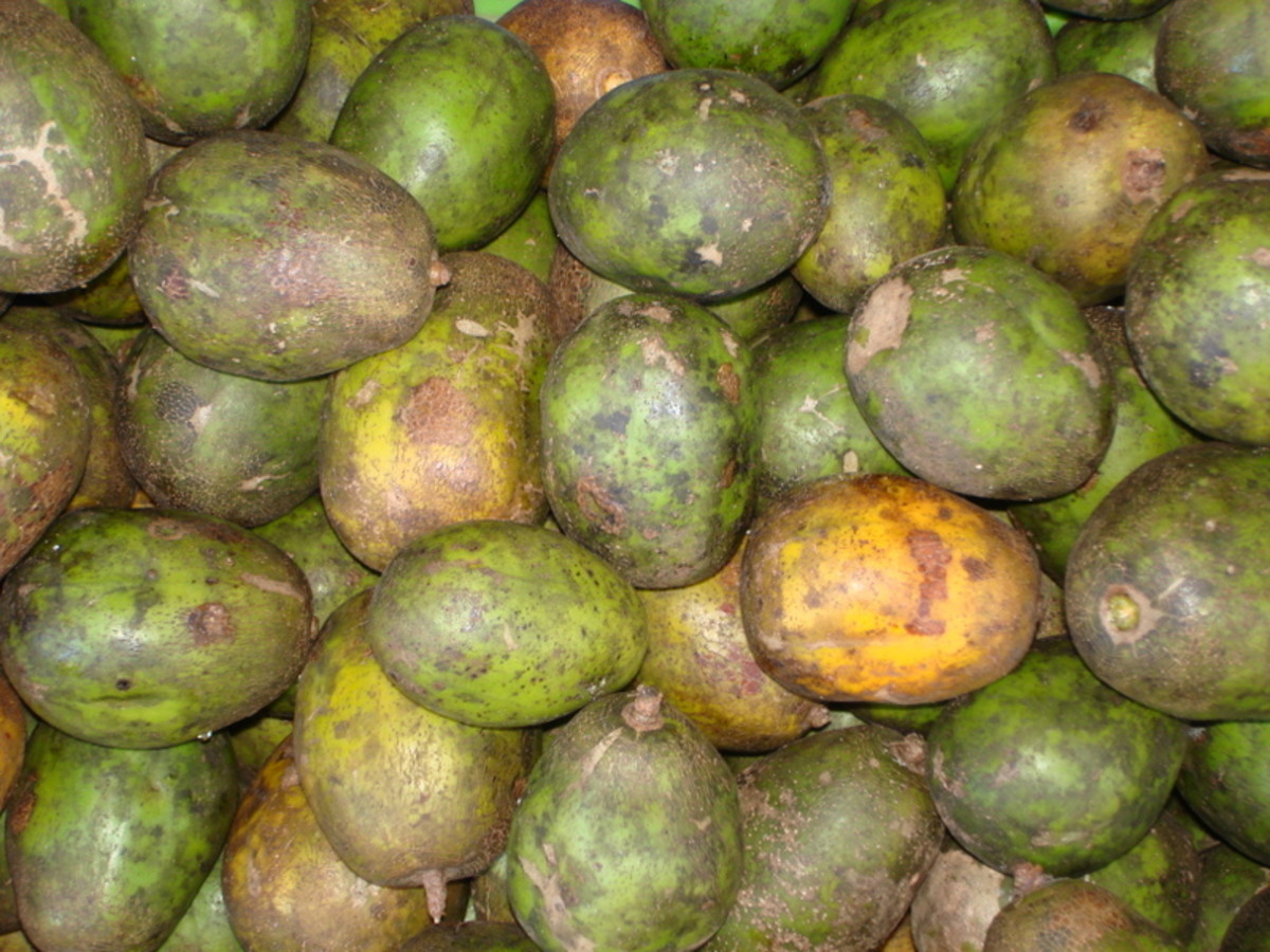 The yuplon is an acidic fruit that is seasonal in availability.  It is not pretty on the outside, however.