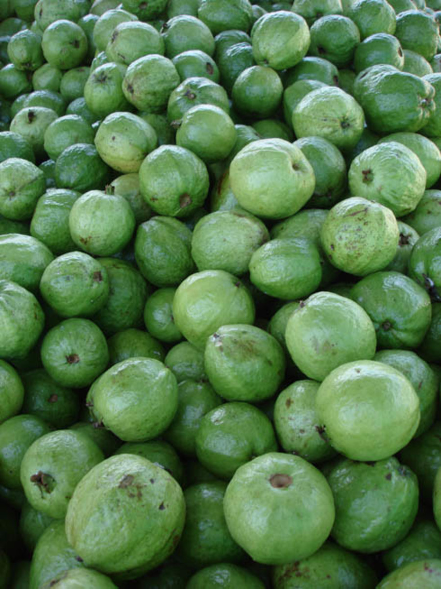 Guava (guayaba) fruits are popular.  They are more acidic than an apple and when mature, are used to make jellies.  They are eaten fresh when green.