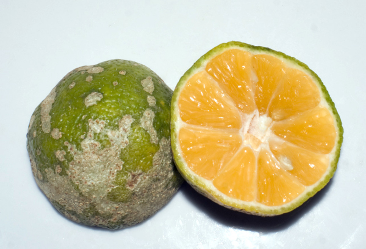 The Mandarin lime is a central ingredient in many dishes.  There are also green limes in the country.  There aren't any lemons in the country.