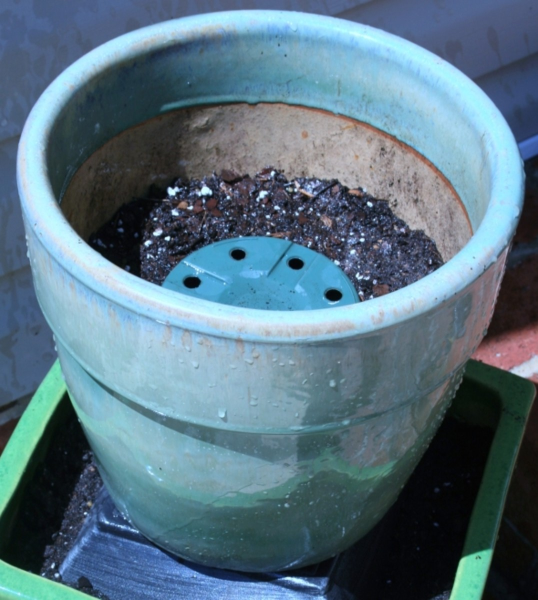 Inserting pot fillers like old plastic nursery pots and styrofoam will decrease the amount of potting soil needed & make pots lighter.