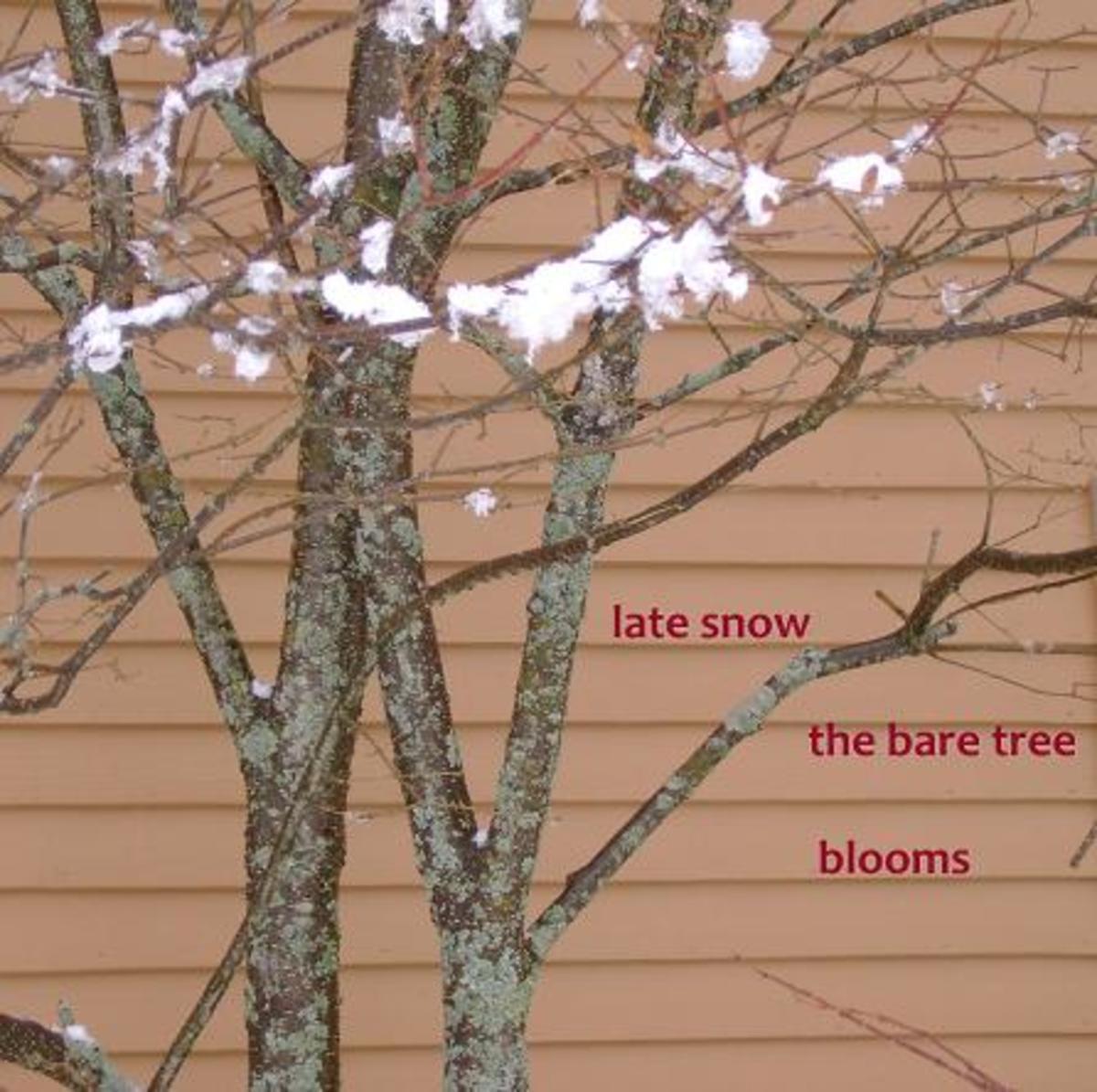 juxtaposition-in-haiku-making-the-cut