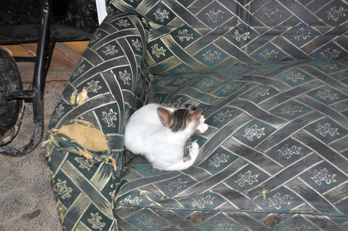 A pesar de la casa lo siento, la familia tenía espacio suficiente en él es el corazón de un gato.