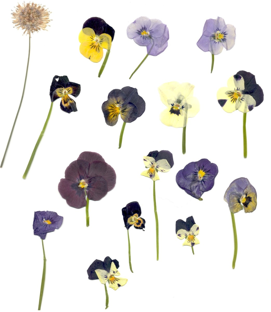 Pretty up any object with pansies.
