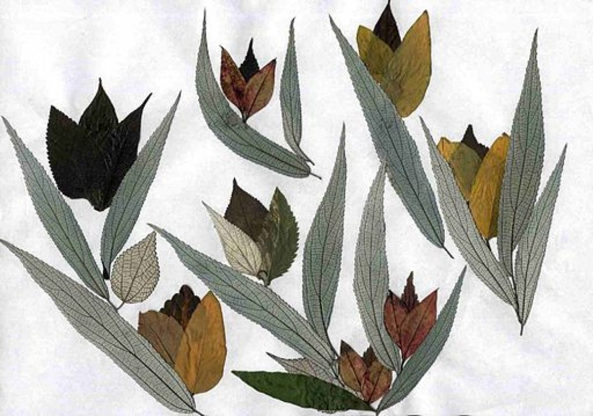 As can be seen, pressed leaves can be quite striking.