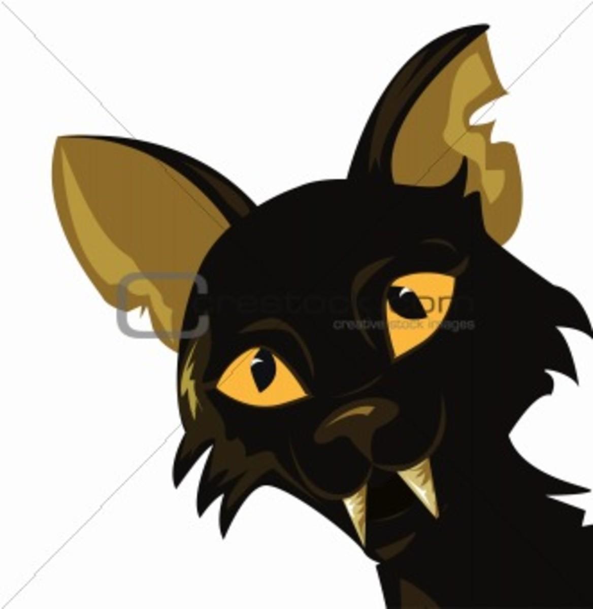 the-black-cat-a-response-essay