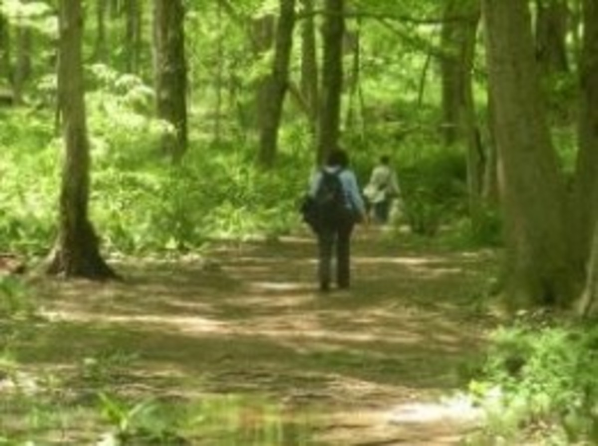 Deserted Village Feltville Trails