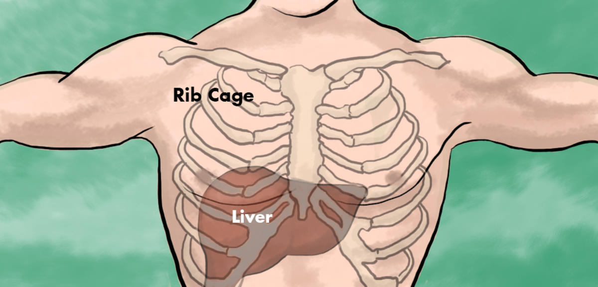 Liver Pain: Location, Causes and Treatment