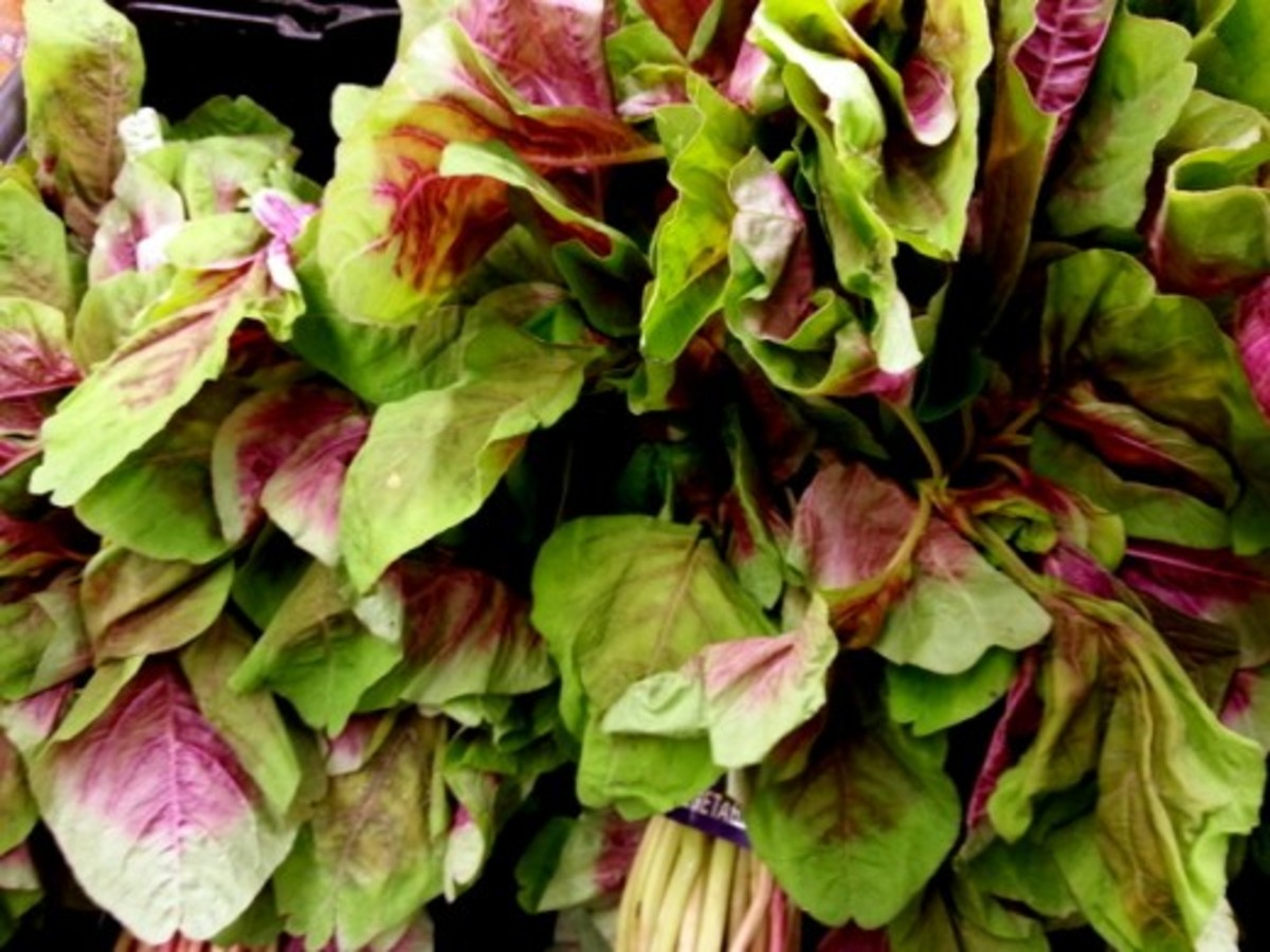 Red leaf vegetable amaranth or Chinese Spinach (bayam merah in Malay) with its distinctive red and green colored leaves. Chinese Spinach is sometimes confused with water spinach (kangkong)