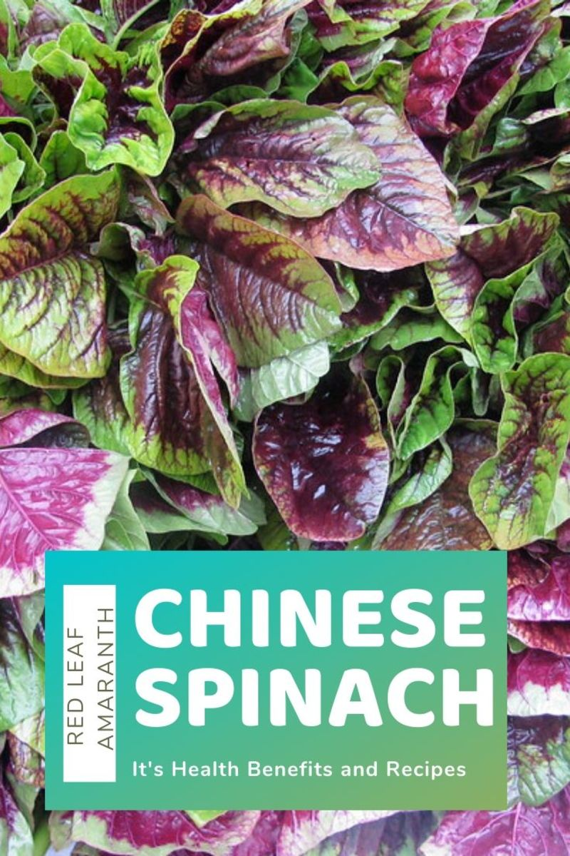 Chinese Spinach Benefits and Recipe (Yin Sai, Edible Amaranth)