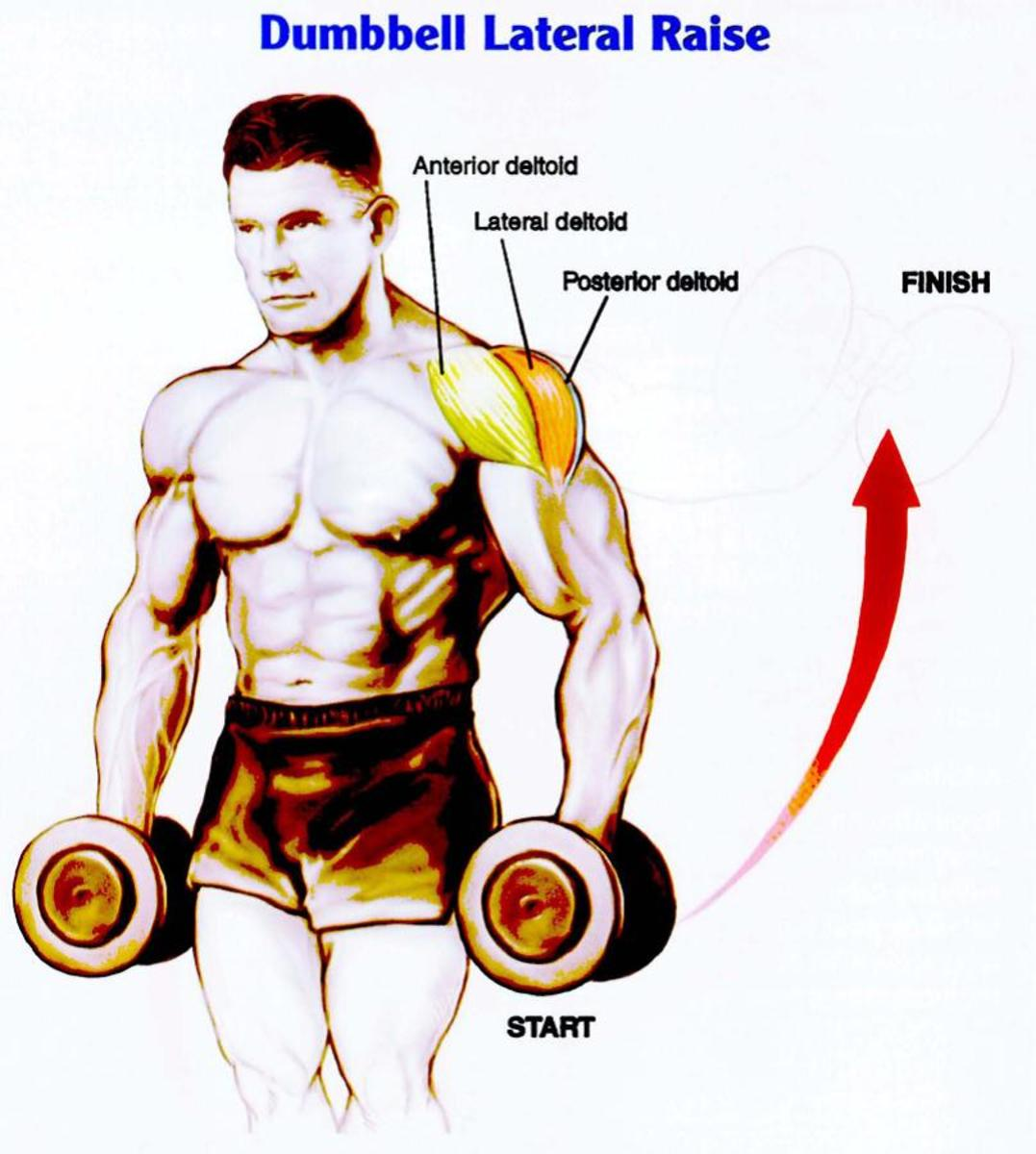 Want Wider Shoulders? The Three Most Effective Methods to Increase Their Size