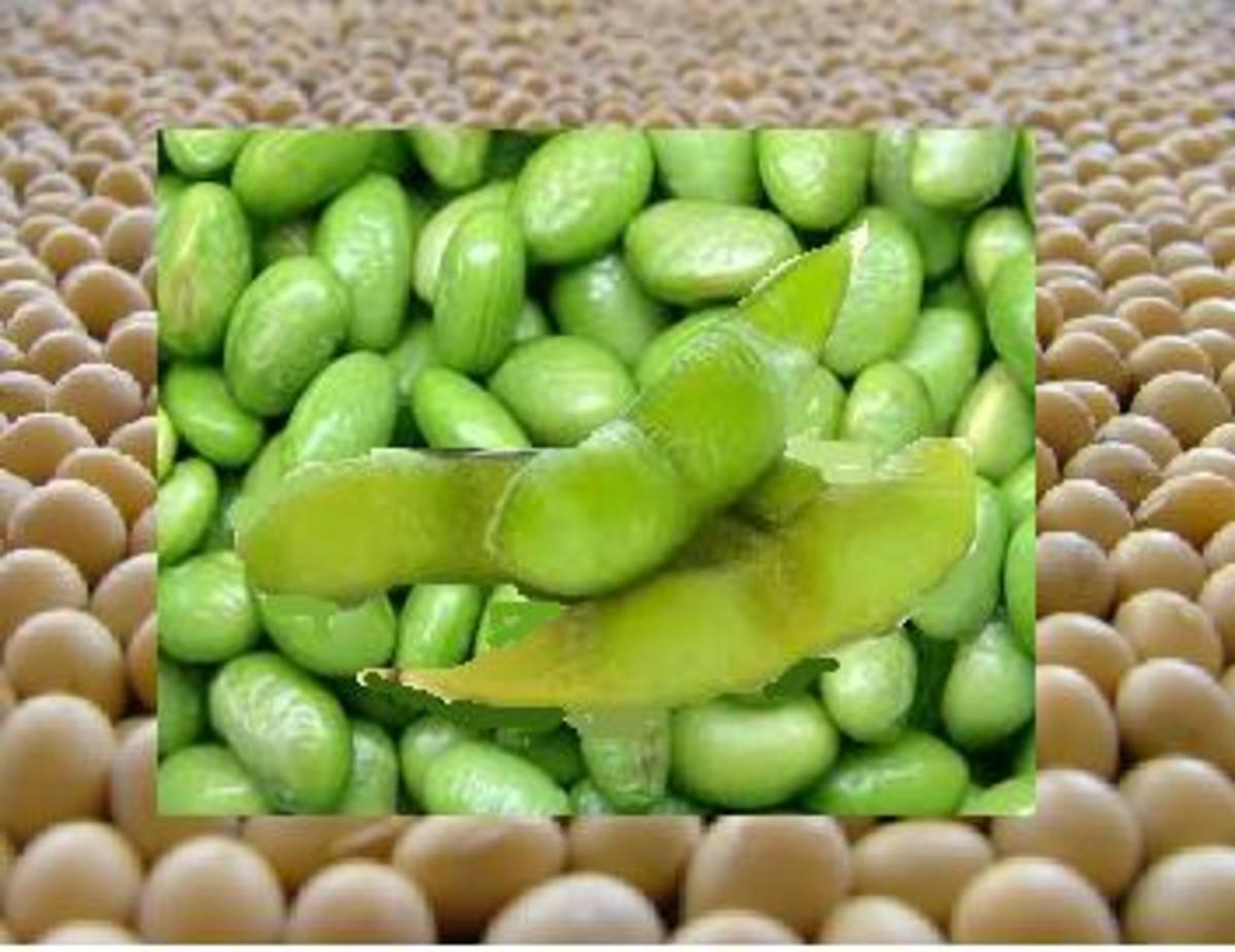 alternative-to-gmo-soymilk-genetically-modified-soybeans