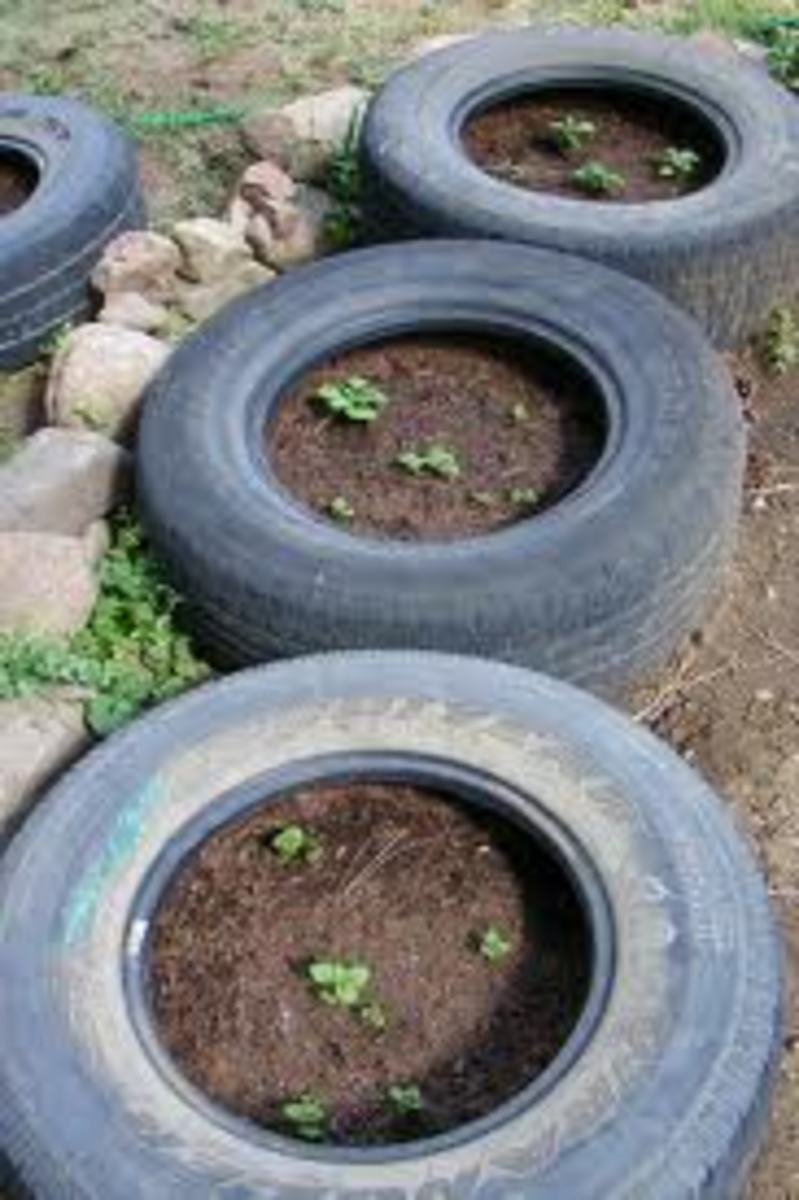 the-idiots-guide-how-to-grow-potatoes-potato-growing-in-tyres-in-the-ground-in-the-bedroom