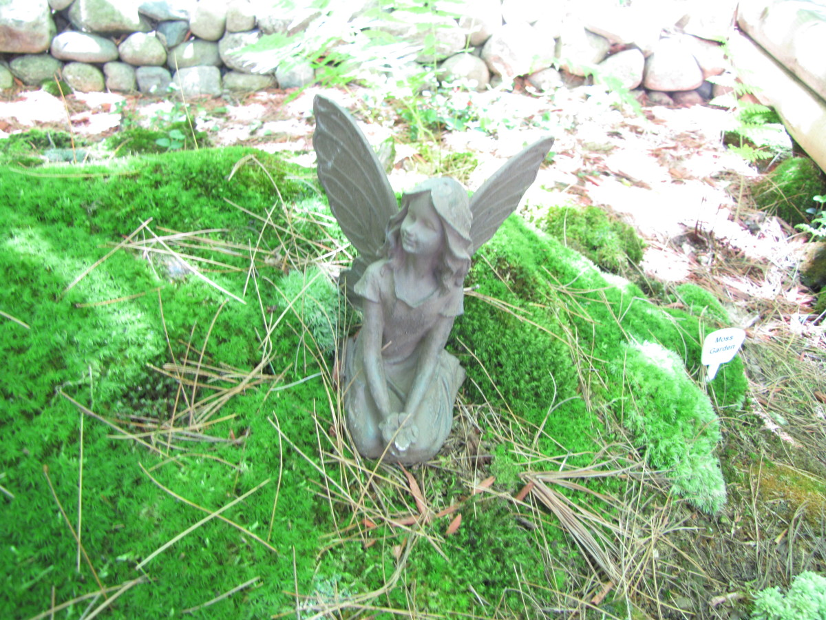 Make fairies welcome in your garden by creating a miniature landscape just for them.