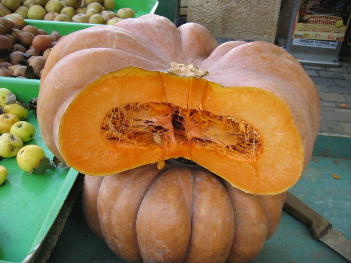 The Pumpkin Fruit