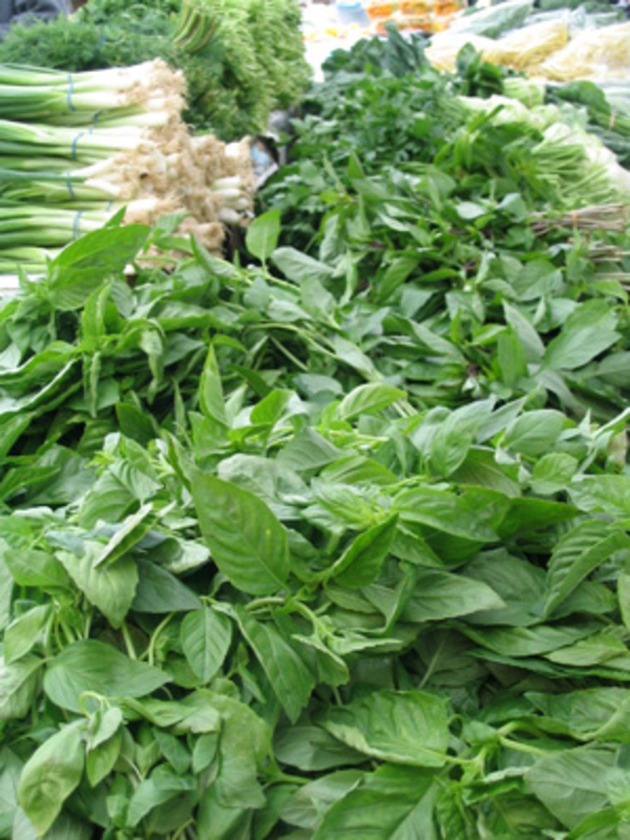 Fresh Herbs and Strong smelling plants repel all mosquitoes, including the Asian Tiger Mosquito.