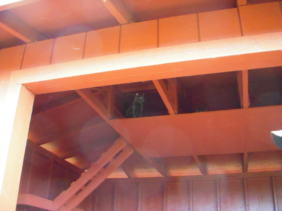 Inside the barn, cubbies make nice hiding spots for cats to enjoy.