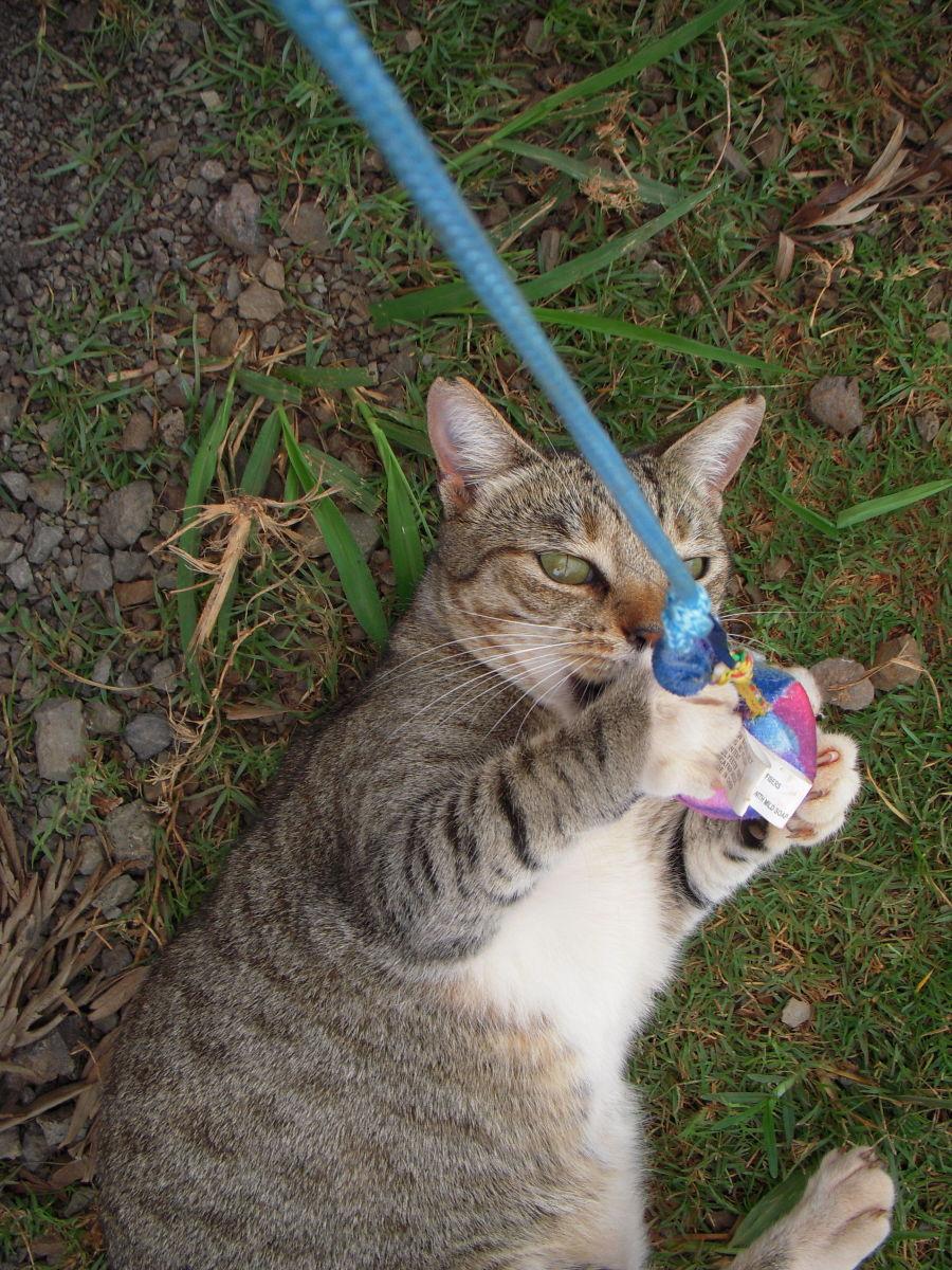A social cat is a happy cat.