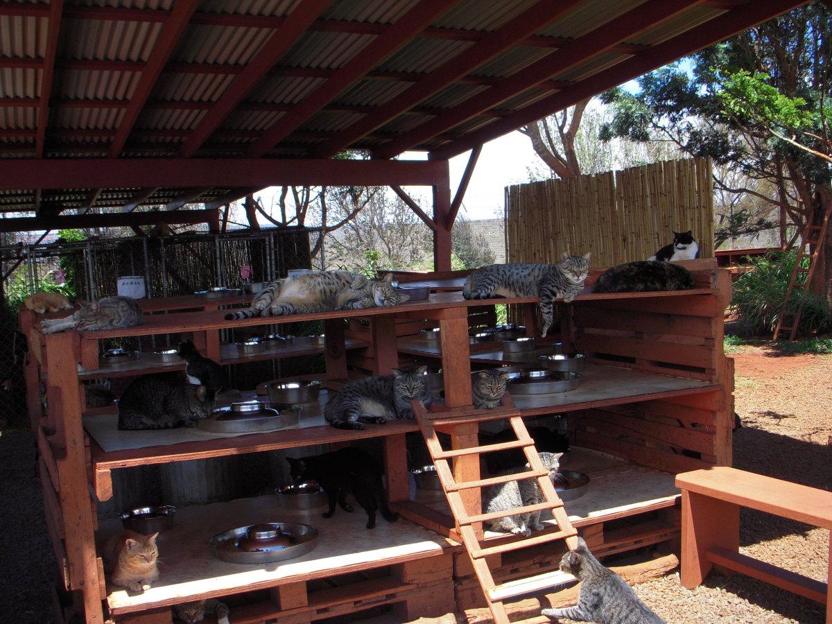 Outdoor feeding station