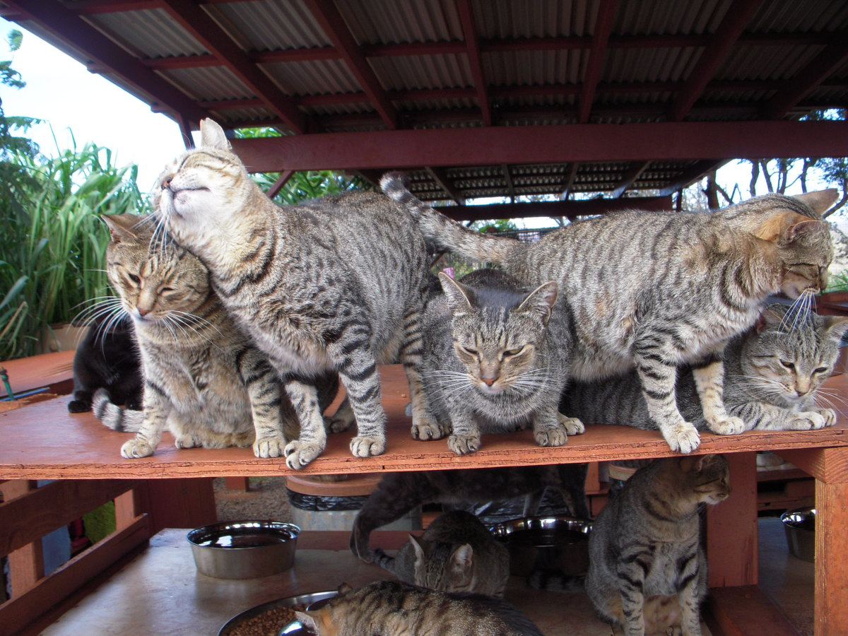 Shelter cats are eager for company