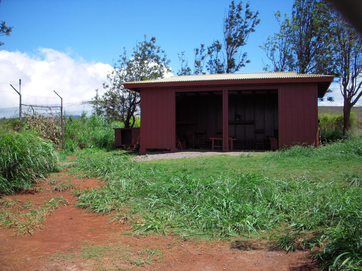 Barn structure built by volunteers to protect cats from the rain.