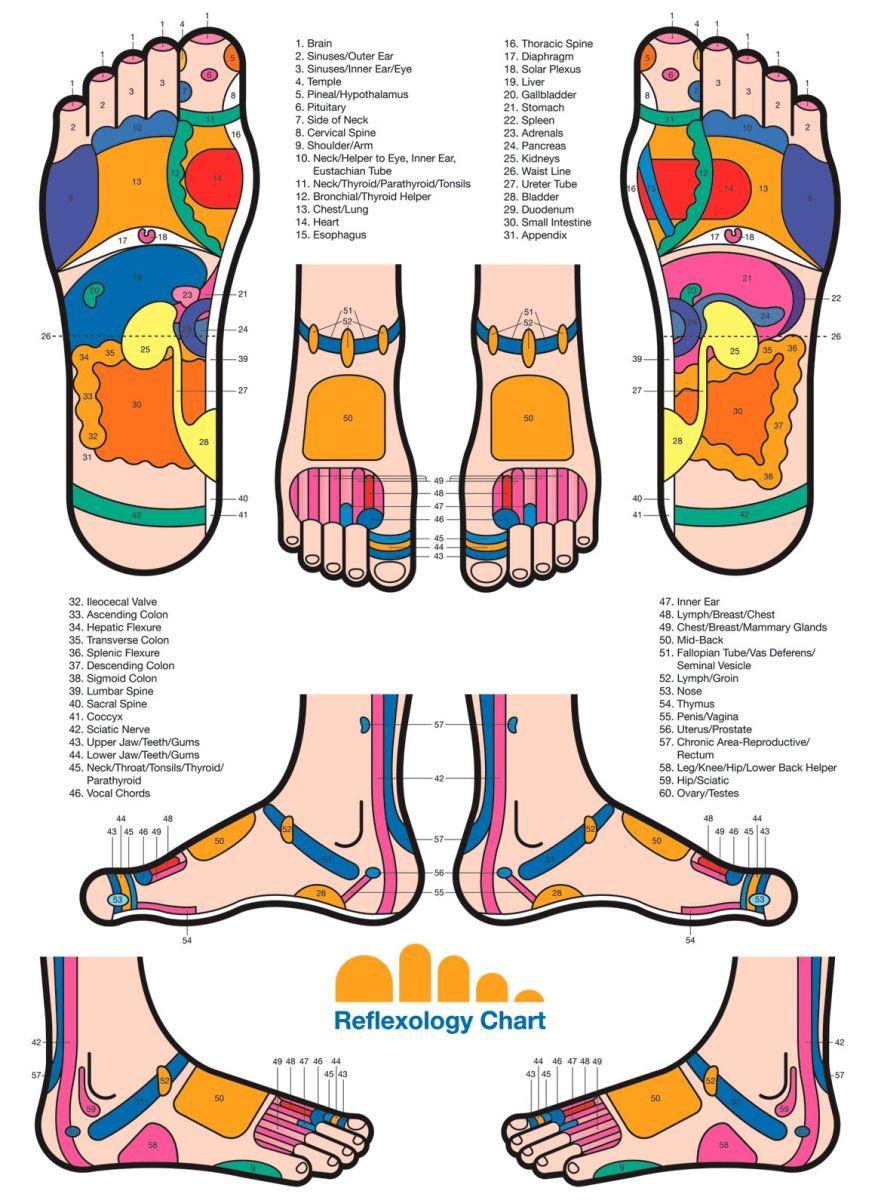 rexlexology chart