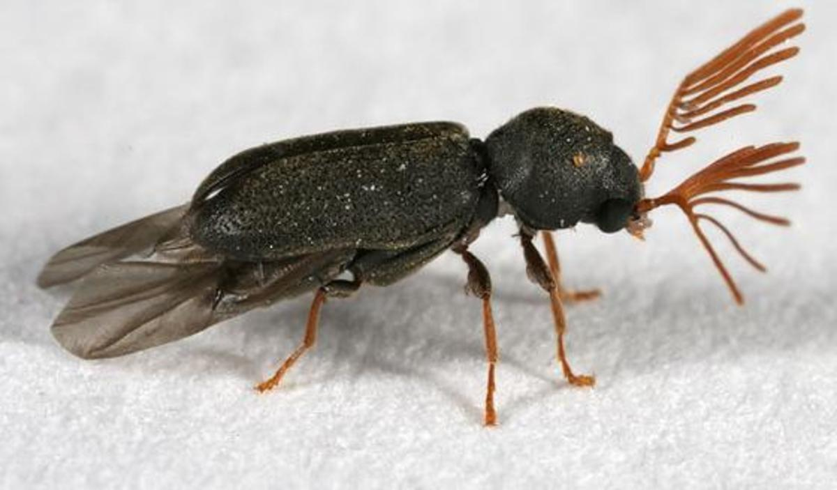 If you listen carefully and a death watch beetle is around you can hear the tapping sound they make on wood.
