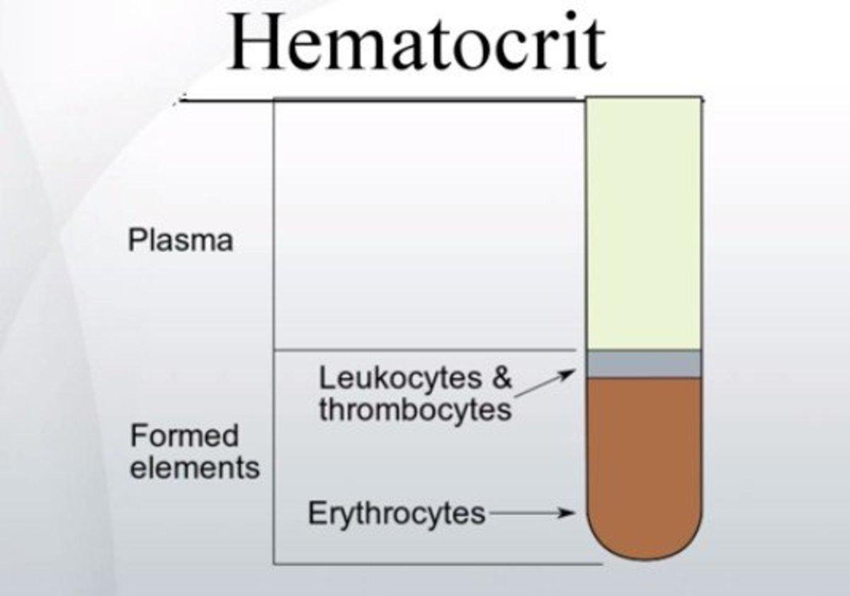Hematocrit levels – Low, High, Normal Range