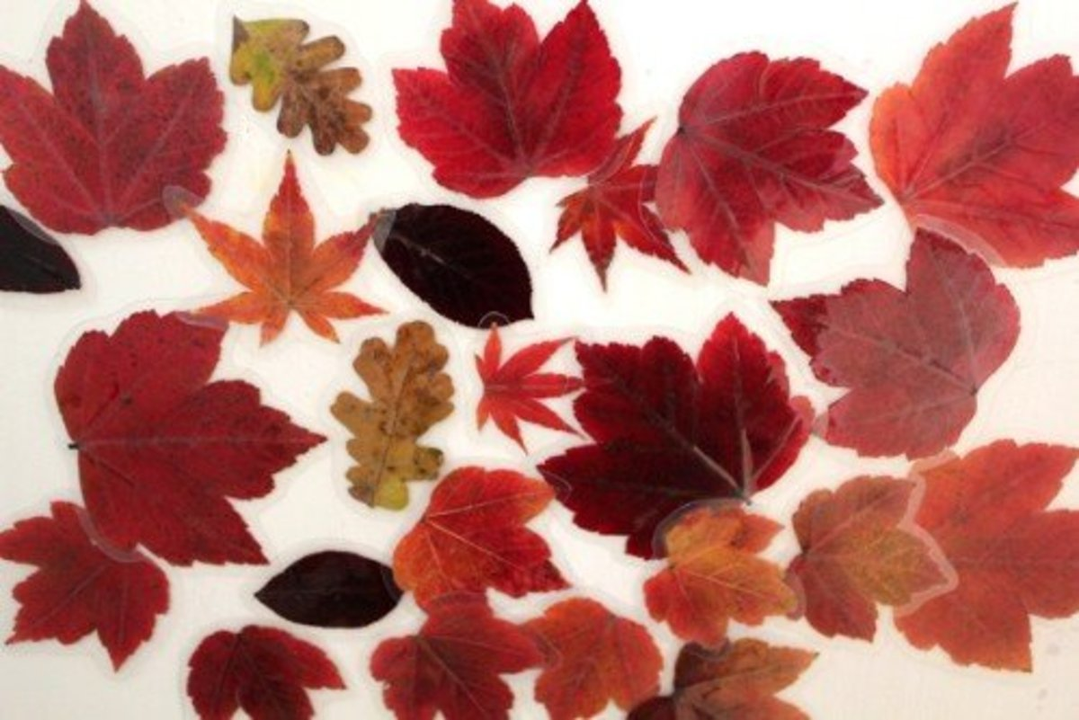 Laminate leaves and glue a magnet on the back to create real fall leaf magnets.