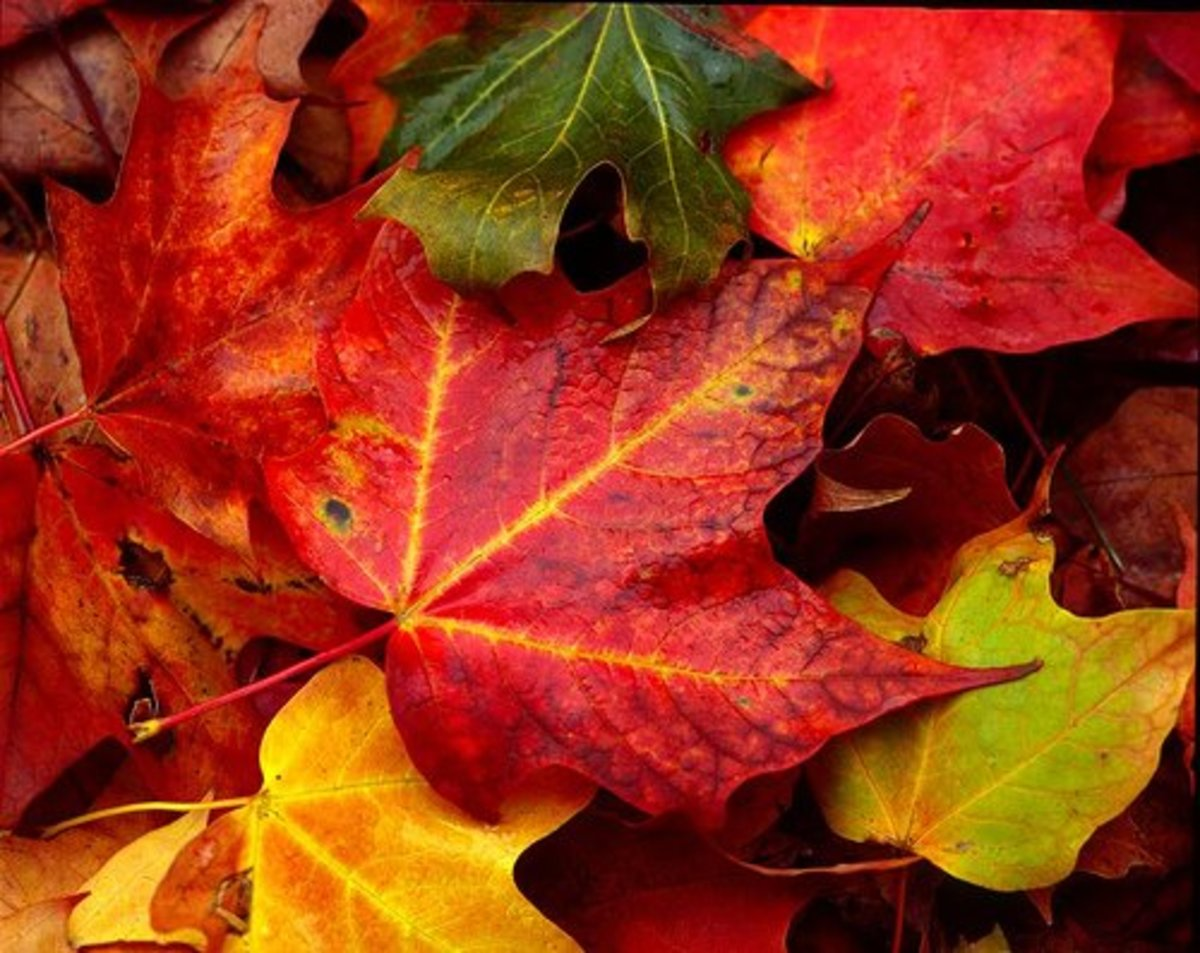 Activities and Crafts with Fall Leaves
