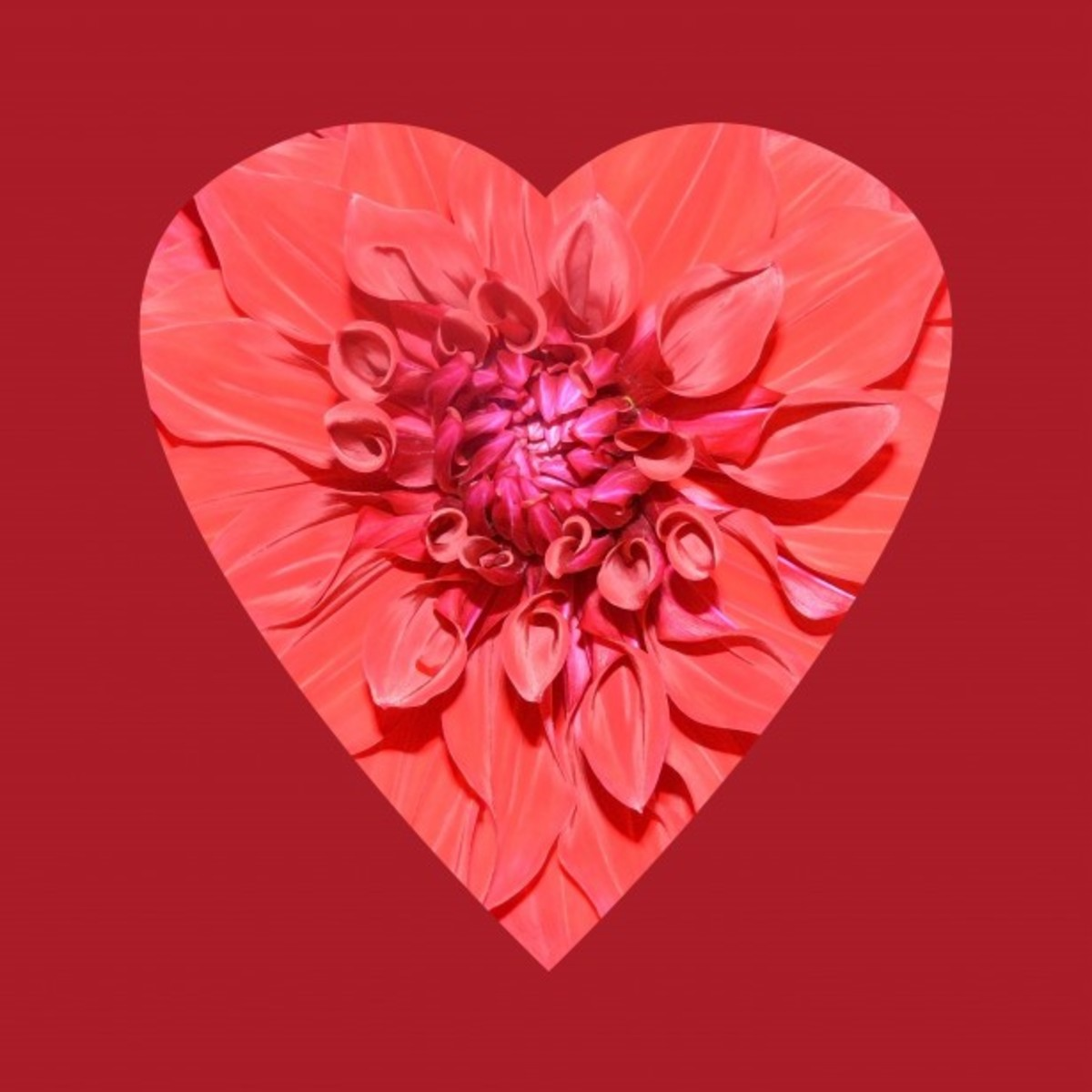 Flower Petal Red Heart Picture