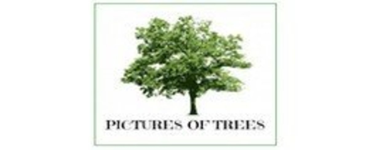 Pictures of Trees