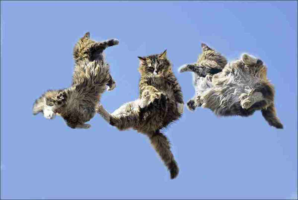 The Flying Cats And Lord Cavendish.