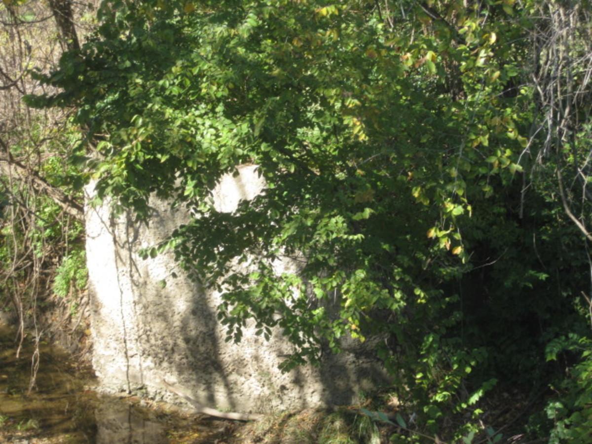 Bridge Abutment peeking out of bushes