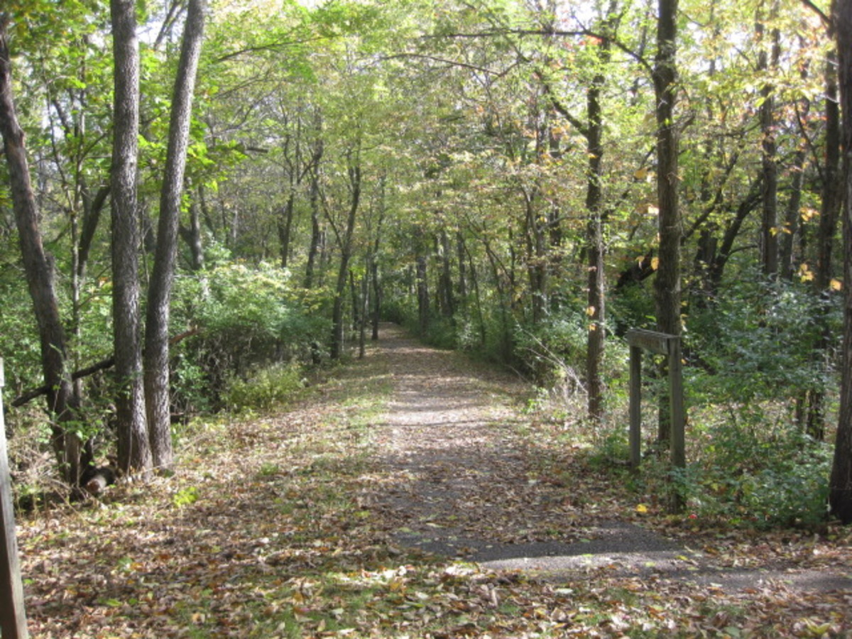 Reused portion of the railroad bed through walking trail Martha Lafite Thompson