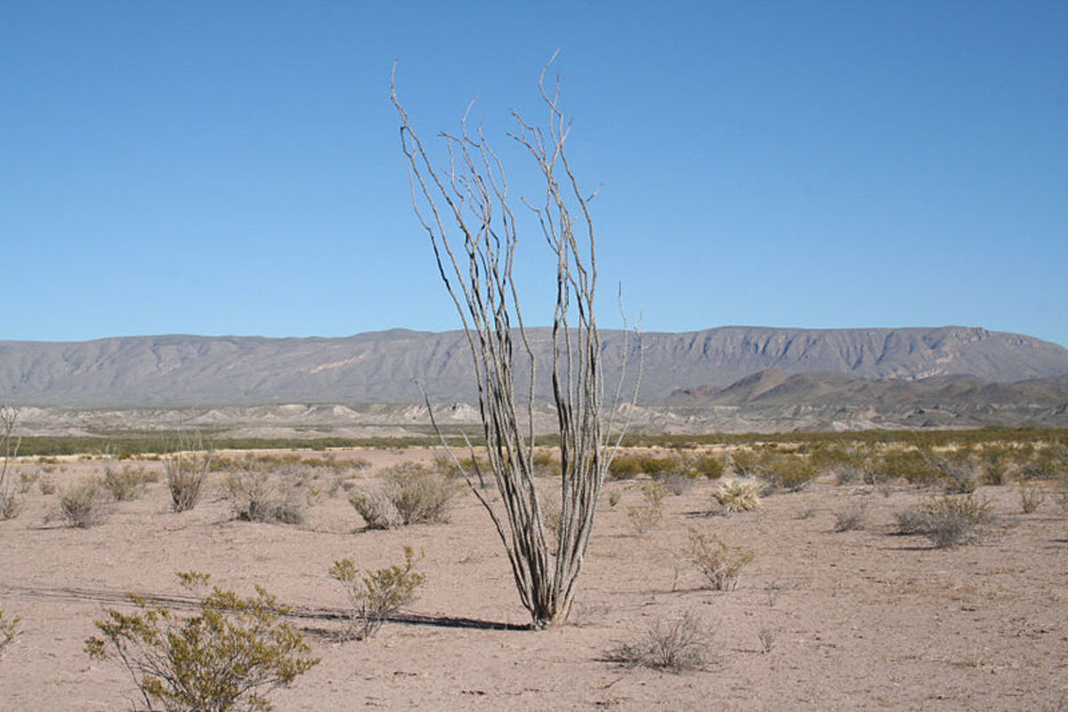 Help students understand Texas geography by showing them a photo of the dessert and vegetation.