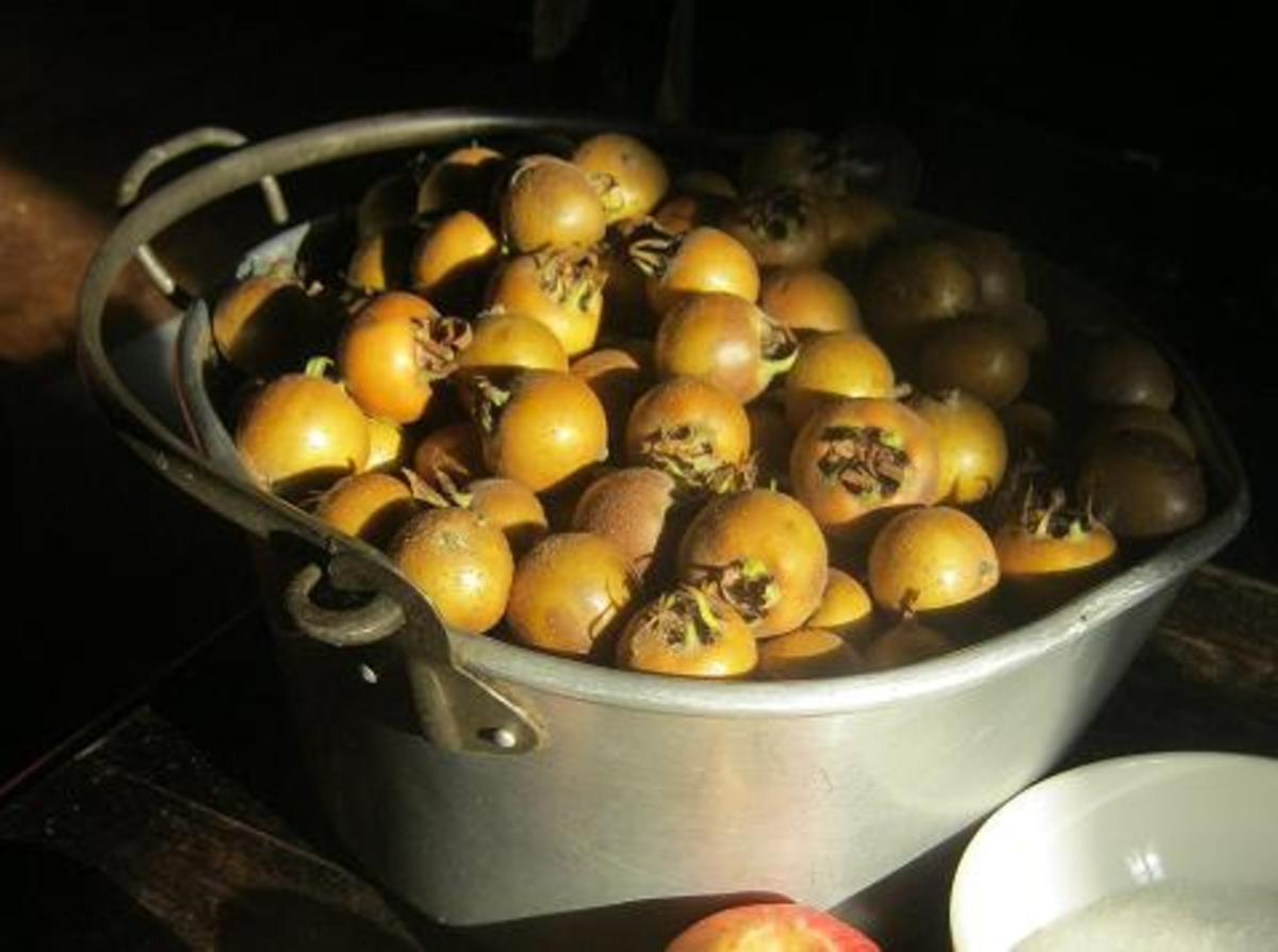Medlars from Les Trois Chenes garden. We are lucky enough to have inherited a medlar tree