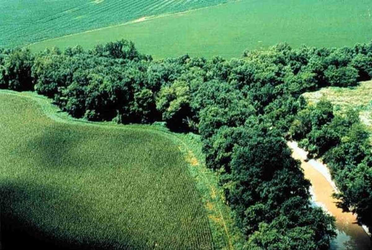 Riparian Habitat River Tributary to Lake Erie