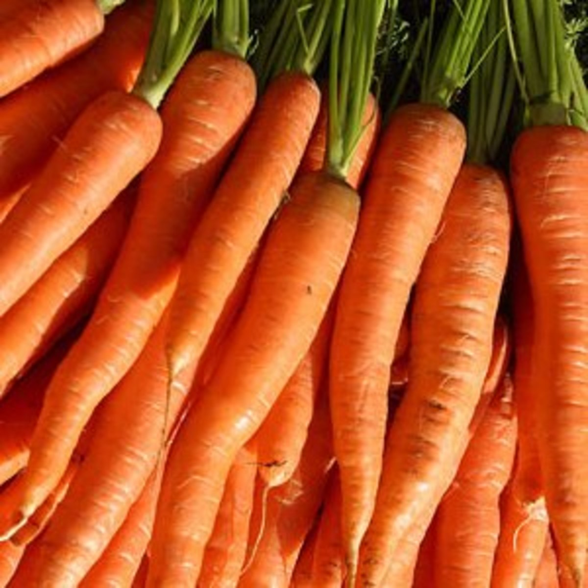 The Idiot's Guide: How to Grow Carrots Indoors & Outdoors